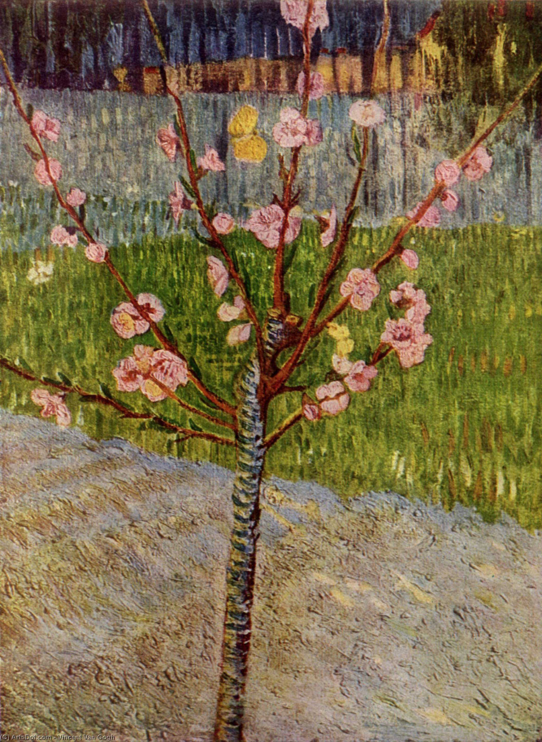 Almond Tree in Blossom, 1888 by Vincent Van Gogh (1853-1890, Netherlands) | Paintings Reproductions Vincent Van Gogh | ArtsDot.com