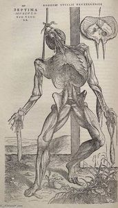 Andreas Vesalius - Dissected human body