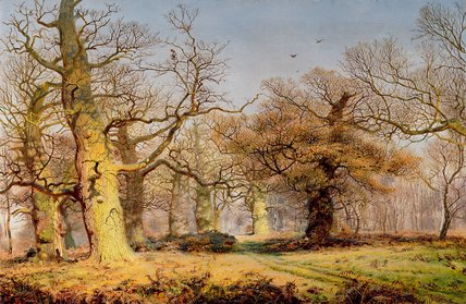 Oak Trees In Sherwood Forest by Andrew Maccallum (1821-1902, United Kingdom) | Paintings Reproductions Andrew Maccallum | ArtsDot.com