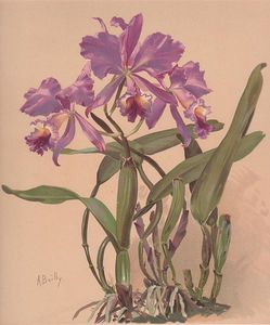 Alice Bailly - Cattleya Watercolor