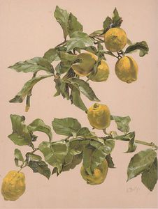 Alice Bailly - Watercolor Of A Lemon
